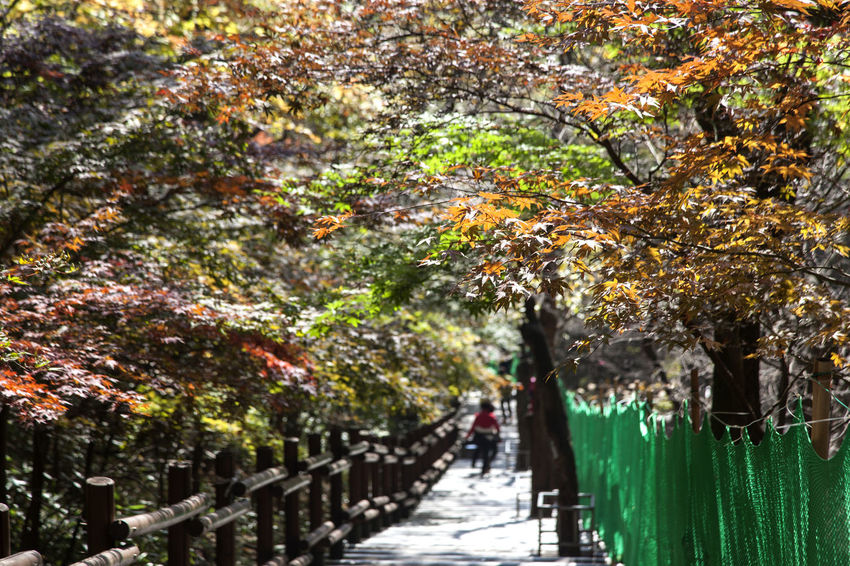 autumn in Maisan Mountain, Jeonju, Jeonbuk, South Korea Autumn Autumn Autumn Colors Beauty In Nature Branch Day Fall Flower Freshness Green Color Growth Leaf Maisan Mountain Nature No People Outdoors The Way Forward Tree Walkway