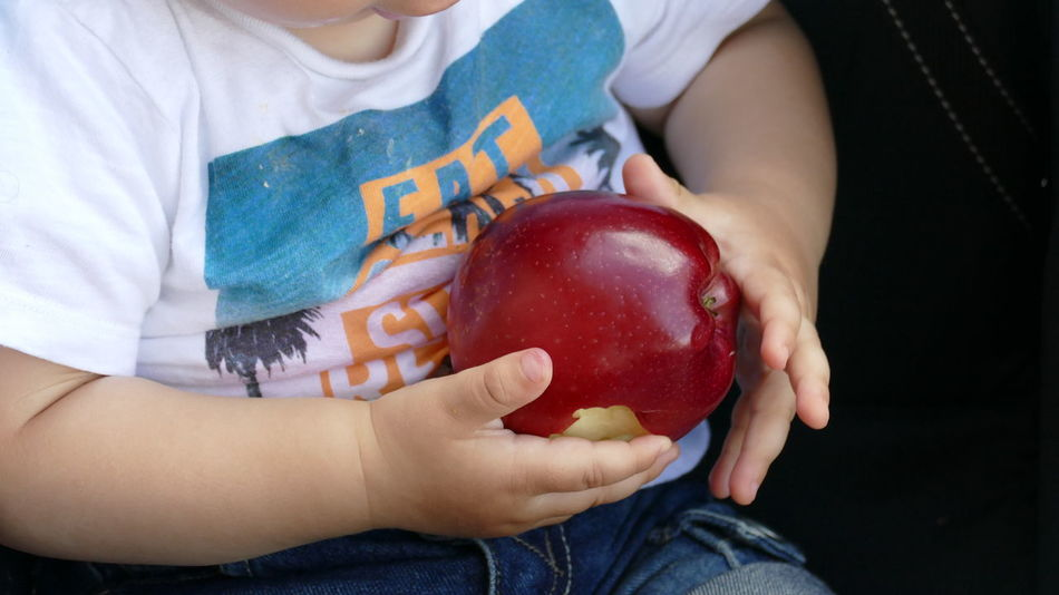 Apple Apple - Fruit Boys Casual Clothing Childhood Close-up Day Food Food And Drink Freshness Fruit Healthy Eating Holding Human Hand Indoors  Kid Hand  Midsection One Person People Real People Red