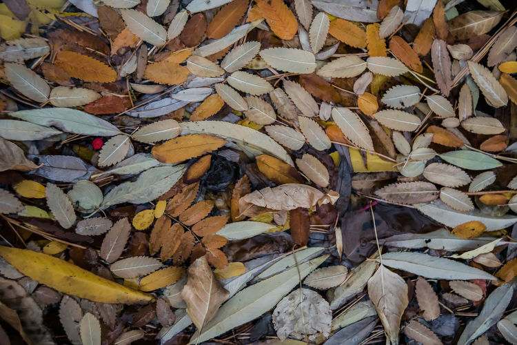 Leafscape - In Praise of Fall Abundance Backgrounds Close-up Day Deforestation Environmental Issues Fall Colors Floating Leaves Full Frame Heap Large Group Of Objects Leaves Leaves Floating Leaves Of Fall Leaves On Water Log Lumber Industry Nature No People Outdoors Stack Timber Water Wood - Material Woodpile