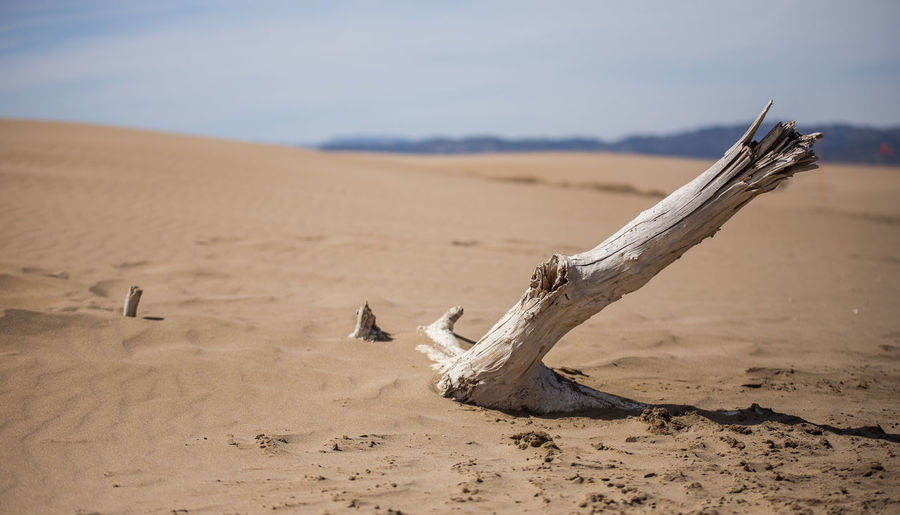 Desert Wood Nature Landscape Driftwood Tranquility Sand Land No People Dead Plant Tranquil Scene Wood - Material Scenics - Nature Climate Arid Climate Focus On Foreground Beach Environment Remote Non-urban Scene Sky Sand Dune Outdoors