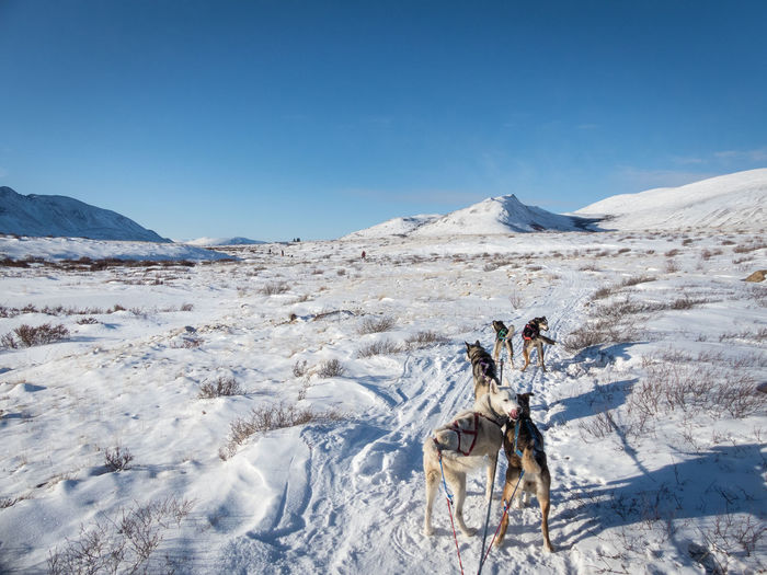 Ice Wilderness Area Winter Blue Sky Canada Cold Temperature Day Husky Landscape Mountain Mountain Range Nature No Clouds No People Outdoors Scenics Sky Sled Dog Tour Sled Dogs Snow Wilderness Wilderness Adventure Wildernessculture Winter Yukon Territory