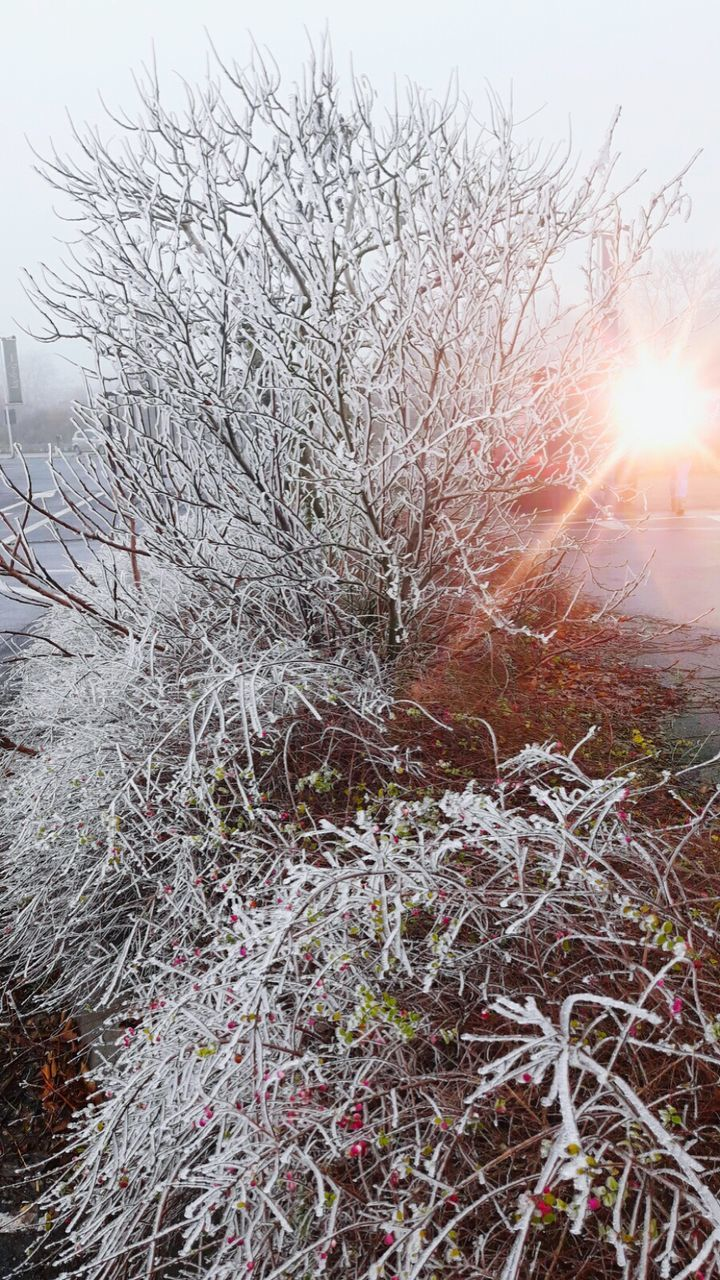 winter, cold temperature, snow, nature, lens flare, tranquility, no people, bare tree, beauty in nature, tranquil scene, outdoors, sun, branch, day, scenics, tree, sky
