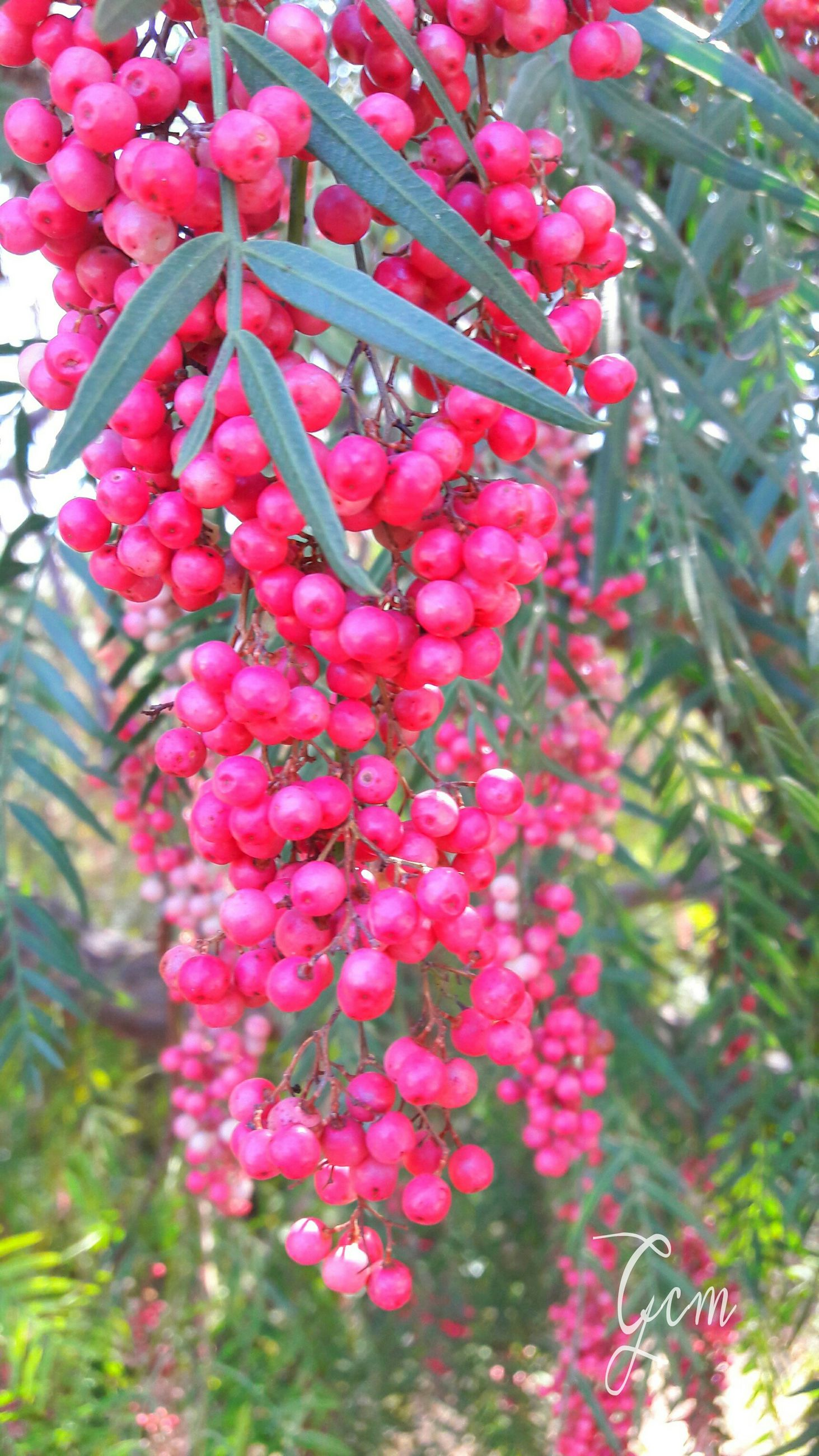 freshness, red, growth, flower, plant, close-up, food and drink, nature, fruit, beauty in nature, leaf, focus on foreground, fragility, abundance, food, day, healthy eating, selective focus, outdoors, no people