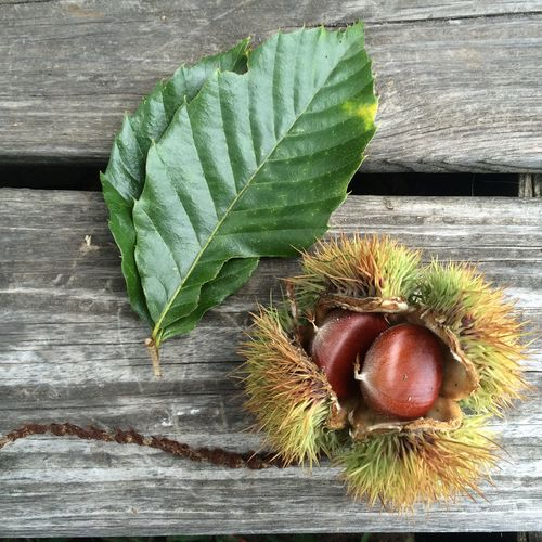 Chestnut Chestnut Burr Chestnut Leaves Chestnut Shell Chestnut Tree Chestnuts Close-up Day Fall Food Foraging Green Color Leaf Looking At Camera Nut Nuts Plank Wild Food