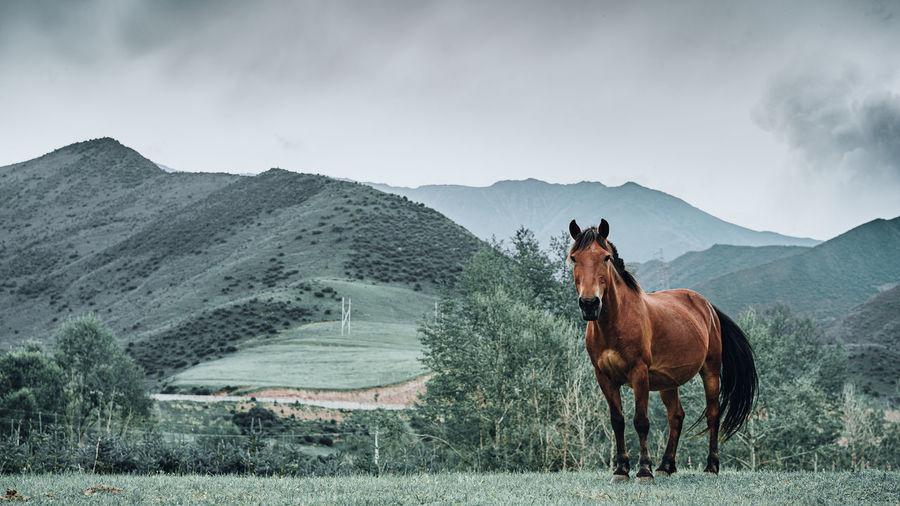 Panoramic view of a horse on field