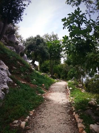 Nature Outdoors No People Tree Beauty In Nature Sky Day Forest Relaxing Nature Amazing Lebanon Montagne Amazing Day Environment Beauty In Nature Wether Weather Bestoftheday Clouds And Sky Amazing View Hello World Mountain Naturelovers Nature Beauty