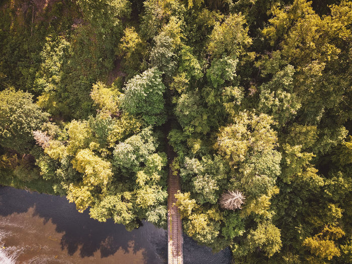 High angle view of plants growing in forest