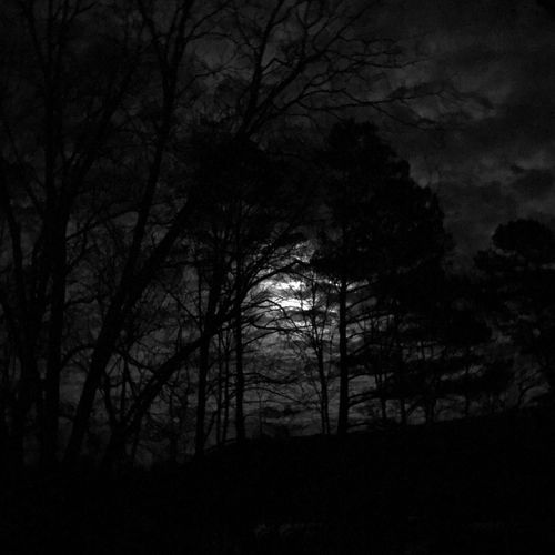 Mississippi nights Trees Silouette & Sky Warm Nights Moon And Clouds