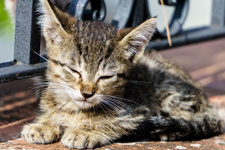 Beautiful Looking At Camera Animal Animal Themes Beauty In Nature Cat Cats Close-up Day Domestic Animals Domestic Cat Feline Mammal Nature No People One Animal Outdoors Pet Pets Puppy Relax Relaxation Relaxing Moments Sitting Whisker