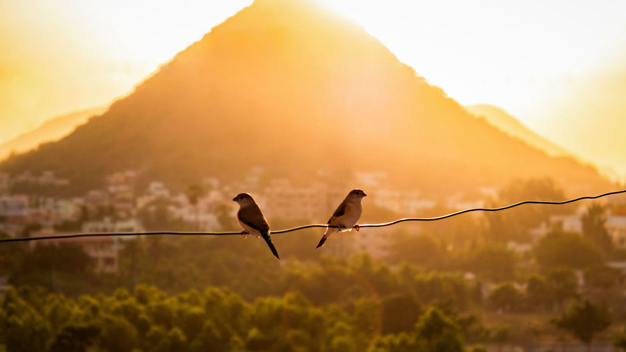 Birds perching on wire against mountain