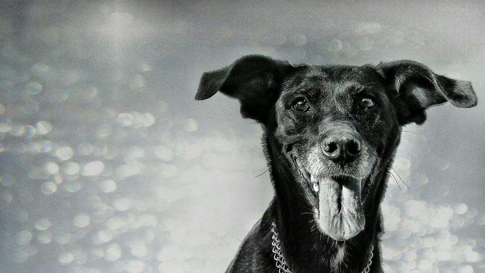 Dogs Of EyeEm EyeEm Gallery Perros Por El Mundo Perros  Dog Live I Love My Dog Animal Photography Dog❤ Dogs 2016 EyeEm Awards Gettyimages The Portraitist - 2016 EyeEm Awards EyeEm Best Shots Eye4photography  Photography The Week Of Eyeem Animal_collection The Street Photographer - 2016 EyeEm Awards Eyeem Awards Getty X EyeEm Blackandwhite Dogs Of EyeEm Black And White Photography Blackandwhite Photography EyeEm Best Shots - Black + White Go Higher Adventures In The City This Is My Skin