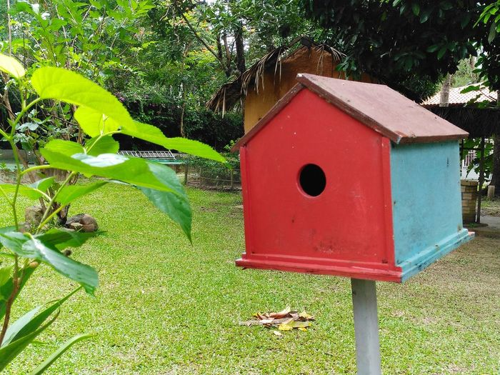a red and blue birdhouse in a park Birdhouse Bird Hole Window Eed Blue Housr Home Park Vegetation Green Dwelling