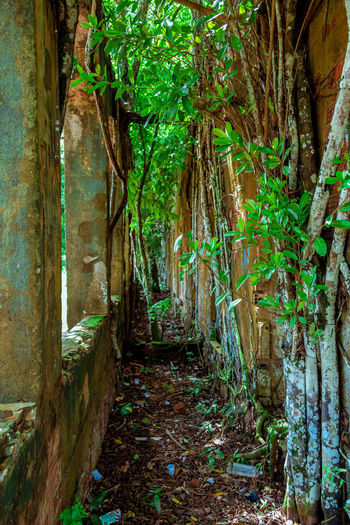 Ruins of Paricatuba Abandoned Buildings Amazon Amazonas Architecture Nature No People Outdoors Paricatuba Ruins The Way Forward
