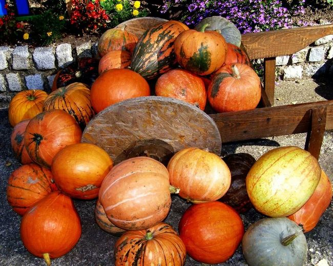 Photography Fresh Pumpkin!Pumpkin! in Asutria Burgenlad ?