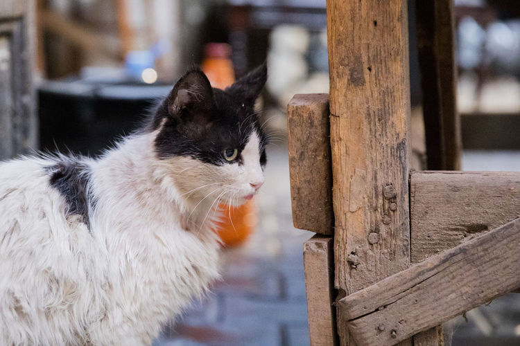 Animal Themes Close-up Day Domestic Animals Domestic Cat Feline Focus On Foreground Mammal No People One Animal Outdoors Pets Whisker Wood - Material