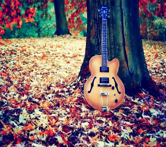 My park and my guitar 🎵music🎵