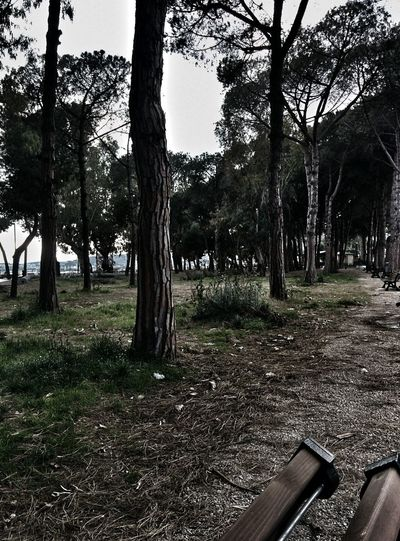 VSCO Nature Tree Photography