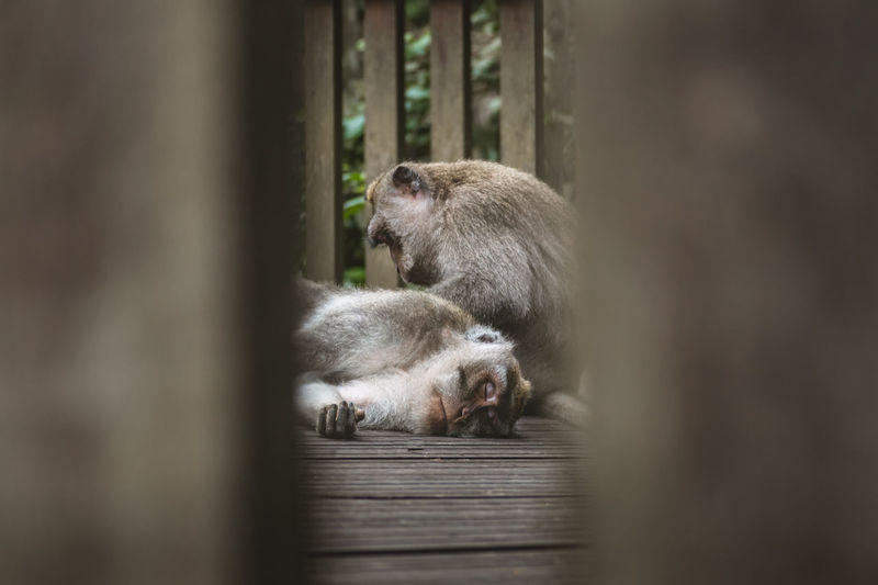 Close-up of monkey grooming
