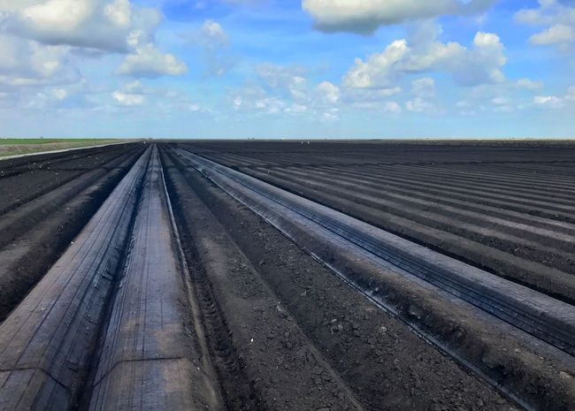 Soil bedded-up for vegetable planting. Soil Agricultural Land Agricultural Field Bedded Soil Production Agriculture Sky Agriculture Outdoors No People Horizontal Landscape Farm Land Rural Scene Day
