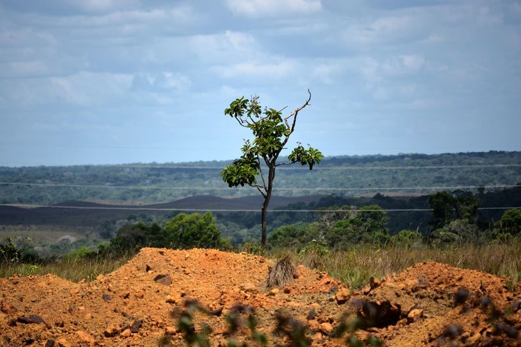 shoot on a trip to Larajal do Jari in Amapá, Brazil! Beauty In Nature Day Field Growth Landscape Larajanl Do Jari Nature No People OiapoqueCity Outdoors Plant Scenics Sky Tranquil Scene Tranquility Tree First Eyeem Photo