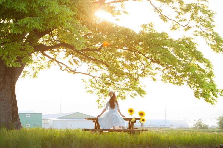 Person Woman Sunset Sunlight Tree Green South Korea Canon Sunflower Canon EOS 5D Mark II Canon 70-200 F2.8 L IS-II 'K' The Life Spectrum