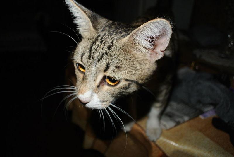 My Cat My Murmyau) Riza