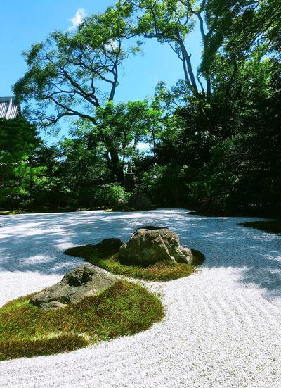 建仁寺 Kyoto Temple 石庭 Tree Green Color Scenics Summer Grass Sky Human Hand Japanese Culture 枯山水 Karesansui (Garden of hill-and-stream landscape without water Beautiful Garden