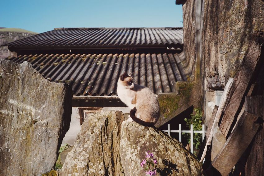 Sunshine Morning CaminodeSantiago In Camino Camino Travel Photography Travel Cat SONY A7ii Backpacking España Europe Camino De Santiago Walking Backpackers Animal Photography The Way SPAIN