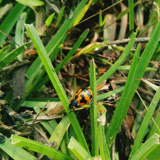 Insect Animals In The Wild Animal Themes One Animal Nature Plant Animal Wildlife Day Green Color Outdoors Leaf No People Growth Close-up Grass Beauty In Nature