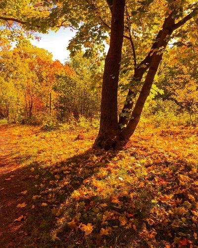 Autumn🍁🍁🍁 Autumn Colors Autumn Leaves Autumn Collection Autumnbeauty Autumn 2016 Autumweather Autumshot Nature_collection Seasons Nature On Your Doorstep Naturephotography