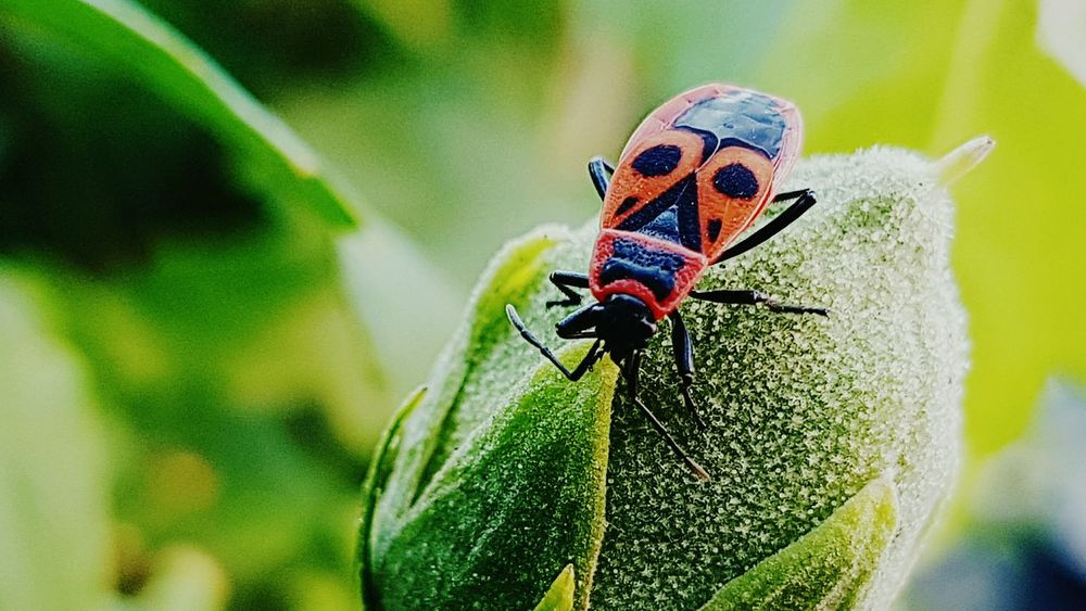 Maximum Closeness Insect Animal Themes Animals In The Wild One Animal Nature Animal Wildlife Close-up Green Color Plant Outdoors No People Leaf Flower Bud Close Up Red And Black Insect Perching Ecosystem  Ecosystem  Animals In The Wild Pattern Green Color Delicate Beauty Ecosystem  Natural Simplicity