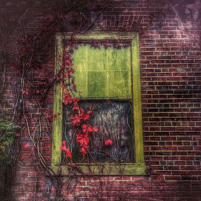 Windows Dailywalk Dailyphoto Red Redivory Decay Beautyindecay Nature Longisland Longislandinstagram