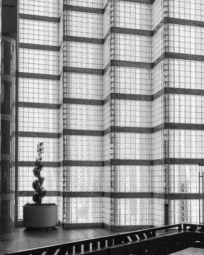Glass Wall Black & White Architecture Building Built Structure Cubes Decoration Design Glass Modern Planter Transparent Window
