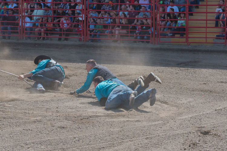 Williams Lake, British Columbia/Canada - July 2, 2016: team of cowboys are dragged through the dirt as they try to catch a wild horse during the Wild Horse Race at the 90th Williams Lake Stampede 90th Williams Lake Stampede Afternoon Arena British Columbia, Canada Cowboys Dragging July Rodeo Wild Horse Race Action Competition Country Western Dirt Documentary Dragged Dust Editorial  Extreme Sport Group Men Outdoors Race Stampede Summer Team