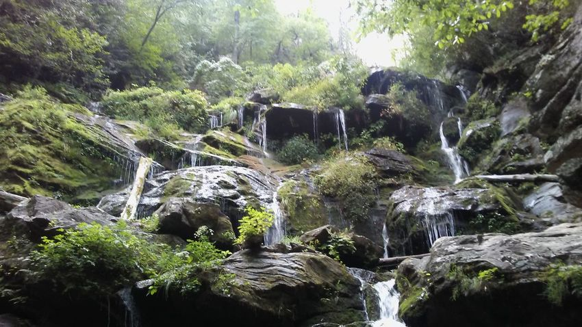 Backgrounds Beauty In Nature Forest Greenery Growth Nature Outdoors Tranquility Tree Waterfall Waterfalls Wood