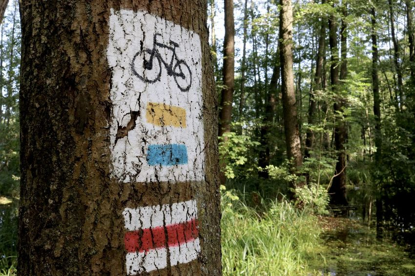 EyeEmNewHere Tree Trunk Bike Bike Trails Forest Forest Track Message Paint