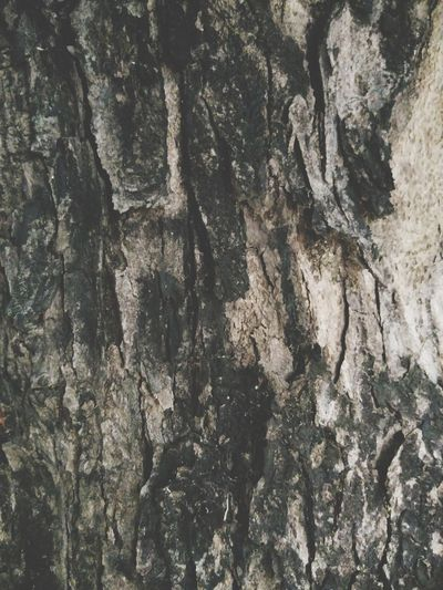EyeEm Selects Old Bark Old Tree🌳 Nature Nature_collection Surface Backgrounds Full Frame Textured  Pattern Rough Abstract Close-up