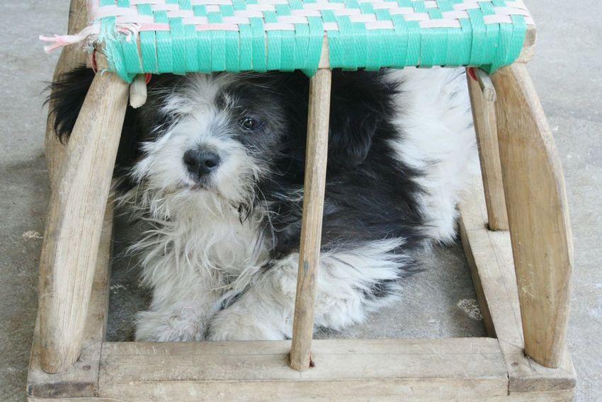 Dog Dog Life Dog Photography EyeEmNewHere Animal Themes Pets Domestic Animals One Animal Pet Portraits