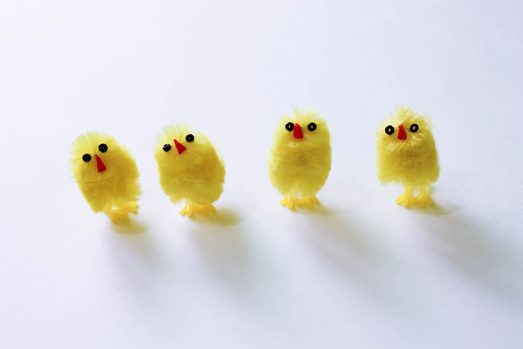 Animal Themes Baby Chicken Bird Chicken - Bird Close-up Day Domestic Animals Early Bird Early Birds Easter Easter Indoors  Minimal No People White Background Yellow Young Animal Young Bird