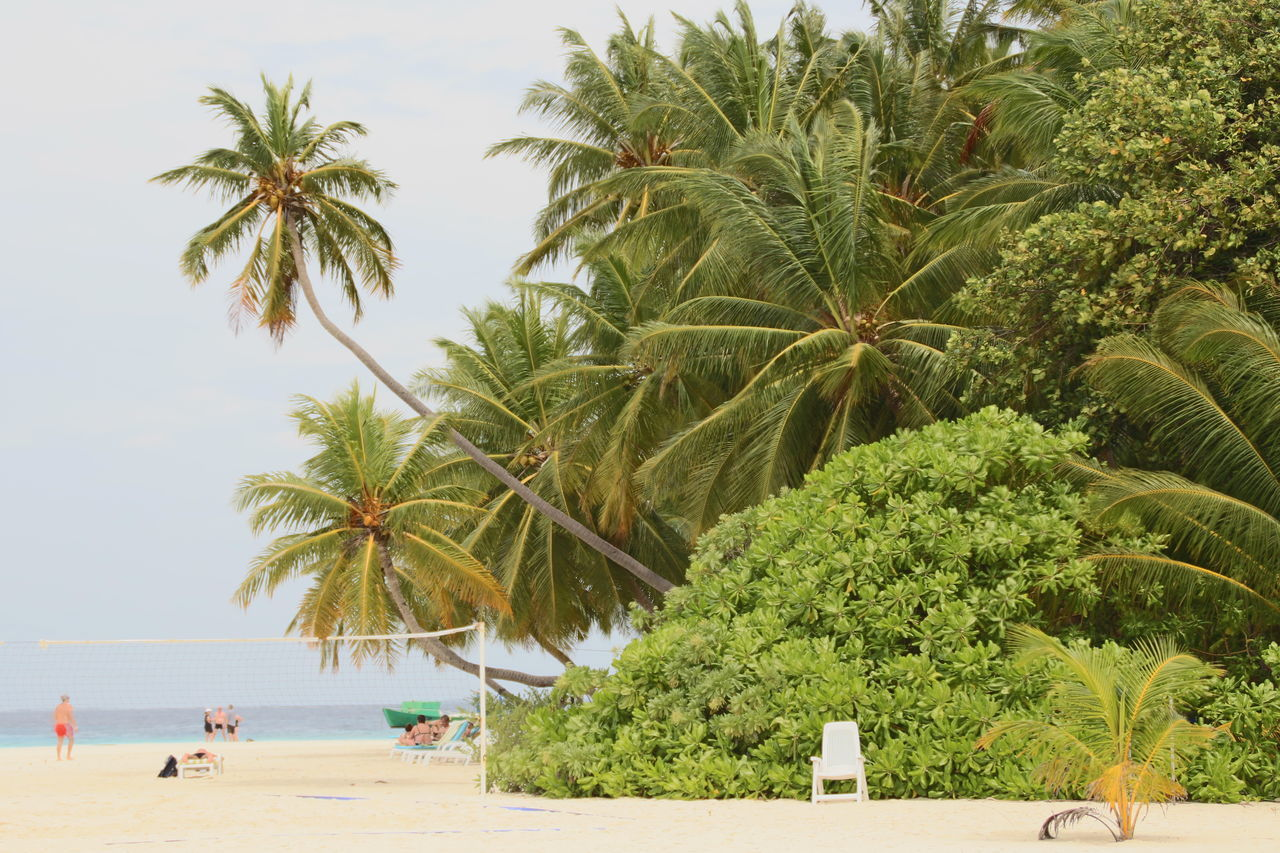 tropical climate, tree, palm tree, plant, sea, beach, water, sky, land, growth, nature, group of people, incidental people, beauty in nature, holiday, trip, day, real people, men, outdoors, coconut palm tree, tropical tree