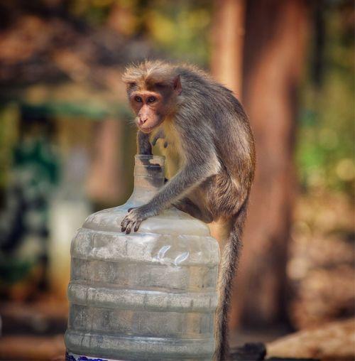 Monkey sitting on plastic bottle in forest