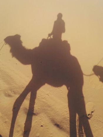 Shadow One Person Happiness Adventure Sahara Sahara Desert Camel Desertlife Desert Outdoors Merzouga Marrocco