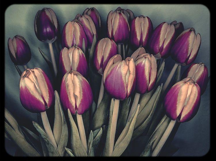 Tulpen Blumen Kreativ