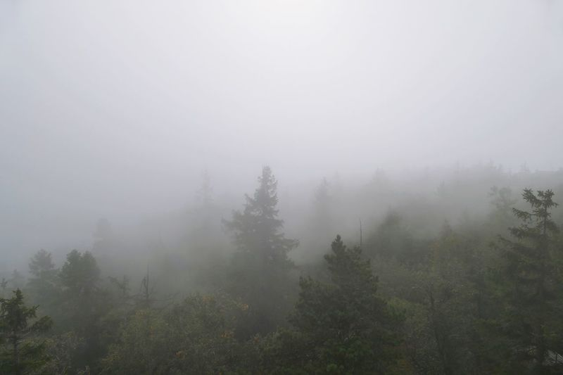 Fog Tree Plant Beauty In Nature Environment Tranquility Scenics - Nature Nature Landscape Tranquil Scene Non-urban Scene Morning No People Idyllic Growth Cold Temperature Sky Hazy
