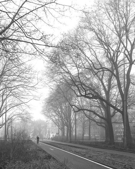 Mobilephotography Streetphotography Streetphoto_bw Trees Misty Morning