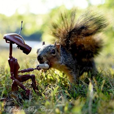 Peanuts are a type of maintenance. He rationalized to his protocols. Pitdroid Funwiththesquirrels Luckywiththeanimals _tyton_ ForceAwakens Natgeo