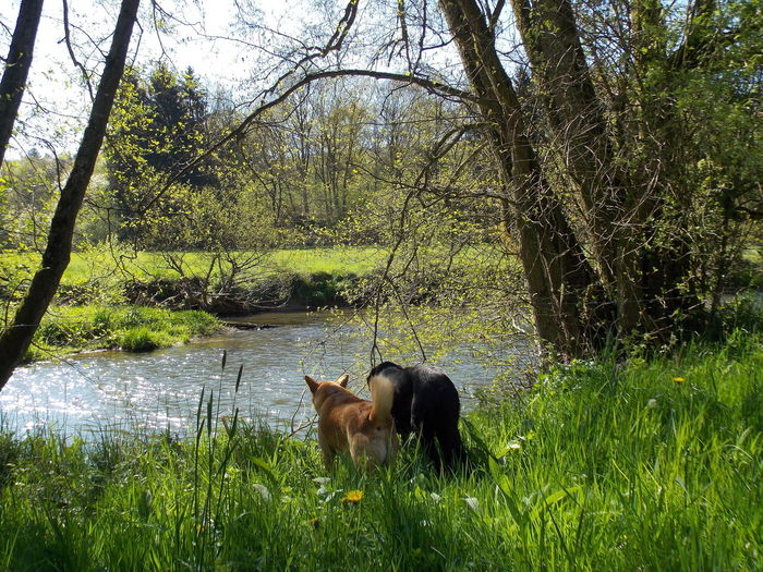 Swimming or not? Animal Animal Themes Beauty In Nature Day Domestic Animals Field Grass Grassy Grazing Green Color Growth Landscape Mammal Nature No People Outdoors Plant Sky Swimming Or Not? Tranquil Scene Tranquility Tree