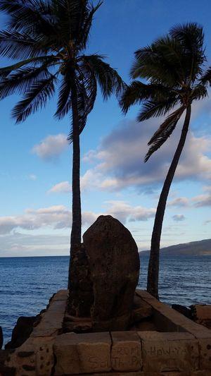 Keihei Sea Horizon Over Water Water Sky Beach Tree Nature Sunset Scenics No People Beauty In Nature Outdoors Day Representing Miles Away EyeEmNewHere Uniqueness The Photojournalist - 2017 EyeEm Awards The Great Outdoors - 2017 EyeEm Awards