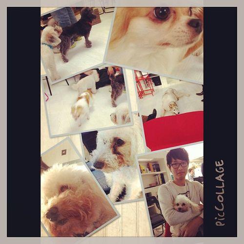Jca Cardinalblue PicCollage  Dogs QME PicCollage