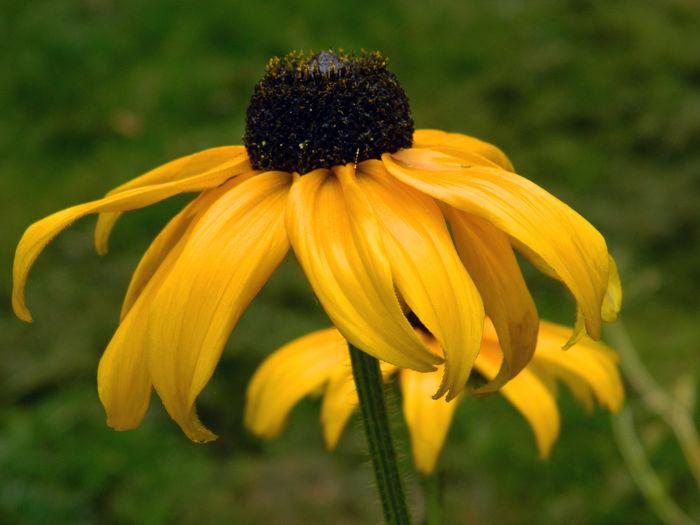Yellow EyeEm